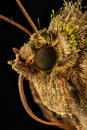 Extreme magnification moth head side view x Royalty Free Stock Photos