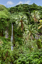 Exuberant vegetation and waterfalls interior of the island of tahiti in the french polynesia with Stock Photography
