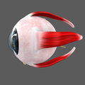 Eye ball Royalty Free Stock Photo