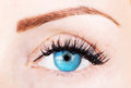 Eye with bushy lashes blue and brow close up picture Royalty Free Stock Photography