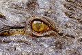 Eye of the Crocodile Royalty Free Stock Photo
