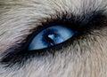 Eye Dog