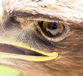 The eye of an eagle in nature