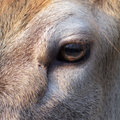 An eye equine particular of Royalty Free Stock Photo