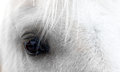 Eye of a Flaxen horse Royalty Free Stock Photo