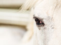 Eye of the Horse Royalty Free Stock Photography