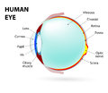 Eye human anatomy schematic diagram of the labeled Royalty Free Stock Photography