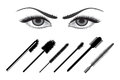Eye liners set of liner brushes with beautiful girl eyes Stock Photography