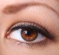 Eye with long eyelashes. woman brown eye Royalty Free Stock Photo