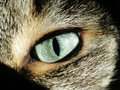 Eye my cat bella s up close and personal Royalty Free Stock Photography