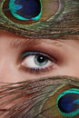 Eye and peacock's feathers Royalty Free Stock Image