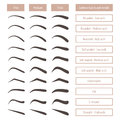 Eyebrow shapes. Various brow types. Vector table with eyebrows and captions.