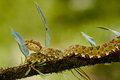 Eyelash Viper Stock Photography