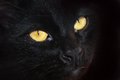 Eyes of a black cat Royalty Free Stock Photos