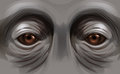 Eyes of an orangutan illustration the Stock Photos