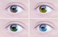 Eyes set of four colored brown light brown green and blue Royalty Free Stock Photography