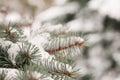 Förgrena sig av blått spruce och snow Royaltyfri Fotografi