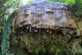 Förstenas vägg i Knaresborough, Yorkshire, UK Fotografering för Bildbyråer