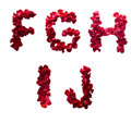F - J made from red petals rose Stock Photography