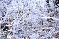 Fabulous hoarfrost on the trees winter landscape with snow covered Royalty Free Stock Photos