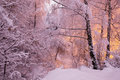 Fabulous night winter forest in the snow. Winter time. Heavy snowfall. Royalty Free Stock Photo