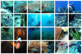 Fabulous underwater collage Stock Images