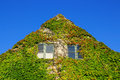 Facade of a house covered with ivy green on blue sky background Stock Photo