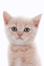 Face of a cute kitten Royalty Free Stock Photo