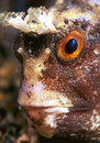 Face fish Royalty Free Stock Images