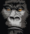 Face of gorilla Royalty Free Stock Image