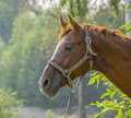 The face of horse on pasture Royalty Free Stock Photos