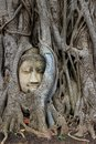 Face in tree Royalty Free Stock Photo