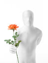 Faceless man with rose dressed white a in hand Royalty Free Stock Images