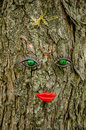 Facial features on tree Royalty Free Stock Photo