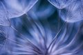 Faded plant for decoration blue and lila Stock Photos