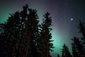 Faint aurora glow of northern lights through an alaskan forest with stars Royalty Free Stock Photos