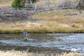 Fairy creek yellowstone usa september fly fishing in fai on unidentified man Stock Photography