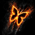 Fairy fire butterfly Stock Photo