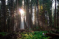 Fairy Forest Royalty Free Stock Photography