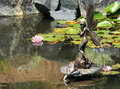 Fairy garden sculpture pond of a and frog on a lily pad Stock Images