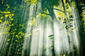 Fairy sunlight in forest Royalty Free Stock Images