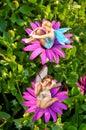 Fairy World 1 Stock Image