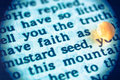 Faith as mustard seed a macro shot of a bible text with the words of jesus have small of new testament gospel of luke Stock Photography