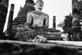 Faithful image of buddha and dry flower in sukhothai thailand Stock Image