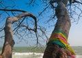 Faithful tree on the beach Stock Image