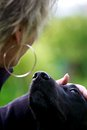 Faithful view a gentle and of a black dog goes directly into every human heart Royalty Free Stock Photo