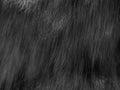 Fake Fur Royalty Free Stock Photo