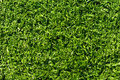 Fake Grass Turf Stock Image
