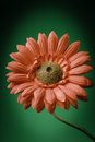 Fake red flower on green background Royalty Free Stock Photos