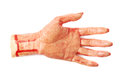 Fake severed hand isolated rubber as a halloween prank toy over the white background Stock Photo